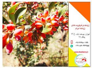 قیمت زرشک - ۲۹ مهر ماه ۹۸